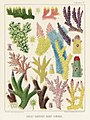 Illustration from The Great Barrier Reef of Australia (1893) by William Saville-Kent from rawpixel's own original publication 00010.jpg