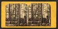 Indian camping ground at Huron Mountain, fish drying on poles, from Robert N. Dennis collection of stereoscopic views.png