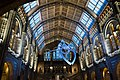 Interior of London Natural History Museum (39897983412).jpg