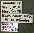 Iridomyrmex purpureus casent0006108 label 1.jpg