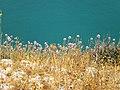 Isola della cipolla selvatica - panoramio (2).jpg