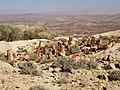 Israel Hiking Map מקדש פליאוליתי.jpeg