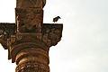 Jain temple pillar Qutab complex.JPG