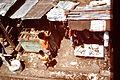 Jakarta-slums-1975-IHS-05-Workshop.JPG