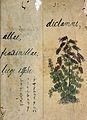 Japanese Herbal, 17th century Wellcome L0030069.jpg