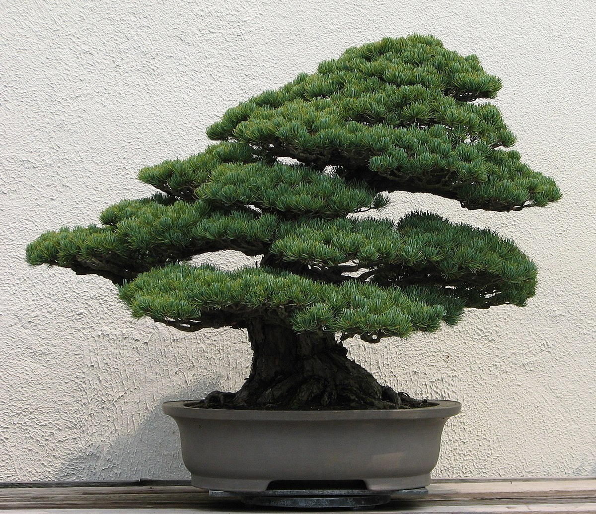 Bonsai wikipedia for Japanese garden plants and trees