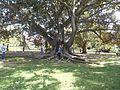 Jardim Botânico (26582710084).jpg