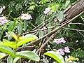 Jardim Santa Rosa, Itatiba - SP, Brazil - panoramio (10).jpg