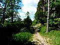 Jezioro Sępoleńskie ścieżka przy brzegu - panoramio (1).jpg