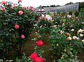 Jindai Botanical Garden-3.jpg