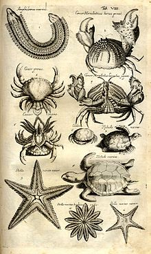 Exceptionnel Biodiversité marine — Wikipédia MT23
