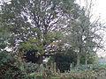 Joodskerkhof1kl.jpg