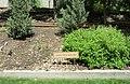 Juniper-Pinyon Woodlands (27555564017).jpg