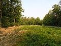 Křičeň, forest.jpg