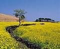 KOCIS Jeju Island (5983275370).jpg
