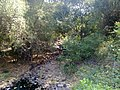 KURUMBAPATTI ZOOLOGICAL PARK, SALEM - panoramio (2).jpg