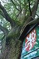 Kaliště, památný strom II.jpg