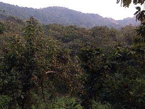 Karnala Bird Sanctuary - Image: Karnala bird santuary 1