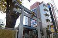 Kashiwa-jinja-fall-torii-dec7-2012.jpg