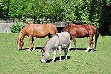 Un âne et deux chevaux à l'arrière dans un pré.