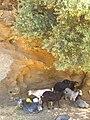 Kea 840 02, Greece - panoramio (21).jpg