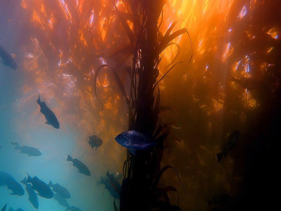 Kelp by Gustavo Gerdel