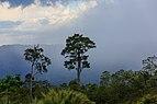 Keningau Sabah Rainforest-after-afternoon-torrential-rain-01.jpg