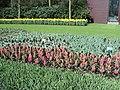 Keukenhof 2012 - panoramio (129).jpg