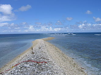Kingman Reef - Dry strip of land on Kingman Reef with a coconut palm seedling; October 2003