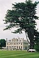 Kingston Lacy, under cedar - geograph.org.uk - 513912.jpg