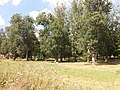 Kiseljak, Smederevska Palanka 129.jpg