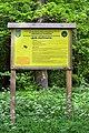 Kivertsi Volynska-Quercus-patriarch nature monument-information board.jpg