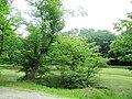 Klimkovice, Zámecká zahrada (4).jpg