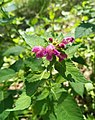 Kocie Gory plants (6).jpg