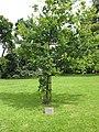 Korean War Memorial - Oak Tree - geograph.org.uk - 515019.jpg