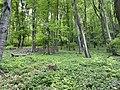 Kosmaj forest 17.jpg