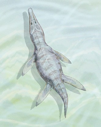 Paja Formation - Image: Kronosaurus bojacens 1DB