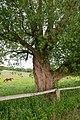 Lügde - 2015-05-29 - LSG-4021-0007 Uhlensenbach (3).jpg
