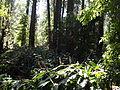 La naturaleza es bella 1.JPG