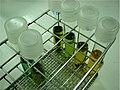 Laboratório de Análises de Água VIII - panoramio.jpg