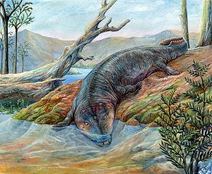 Labyrinthodontia - Early (ichthyostegalian) labyrinthodont.