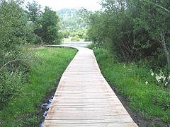 Lac chambon chemin2.jpg