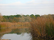 Lago del Parque del Alamillo.