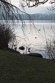 Lake Zurich - panoramio (5).jpg