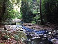 Lamington national park 3.jpg