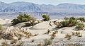 Landscape near Mesquite Flat Sand Dunes Morning 2013.jpg