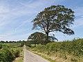 Lane at Lopthorne - geograph.org.uk - 512663.jpg