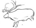 Large reindeer and the head of a Buck Wellcome M0004864.jpg