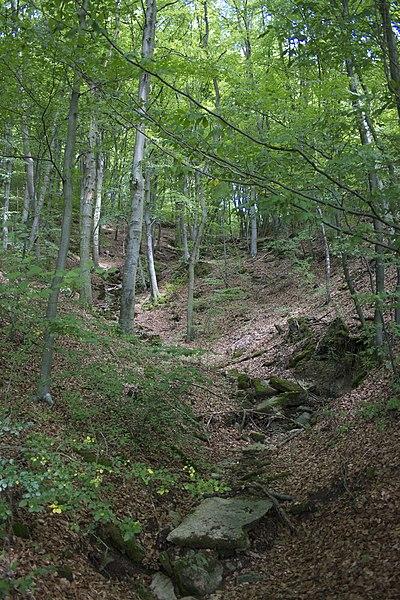 Lekker wandelen in de bossen