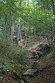 Lekker wandelen in de bossen - panoramio.jpg